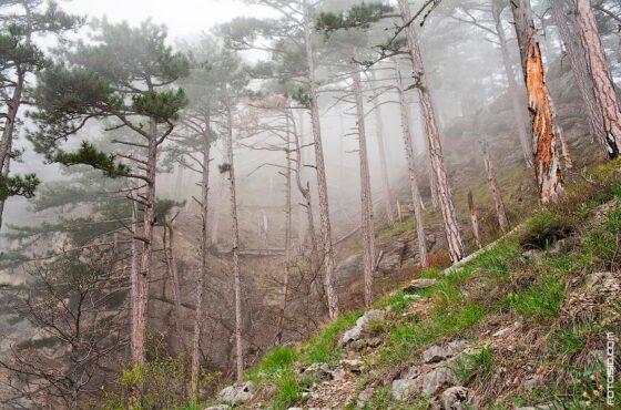 Туманный лес и водопад