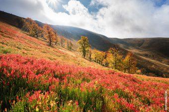 Склоны горы Гемба