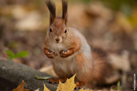 Орешки для белки